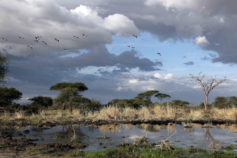 Lake Manyara Nationalpark