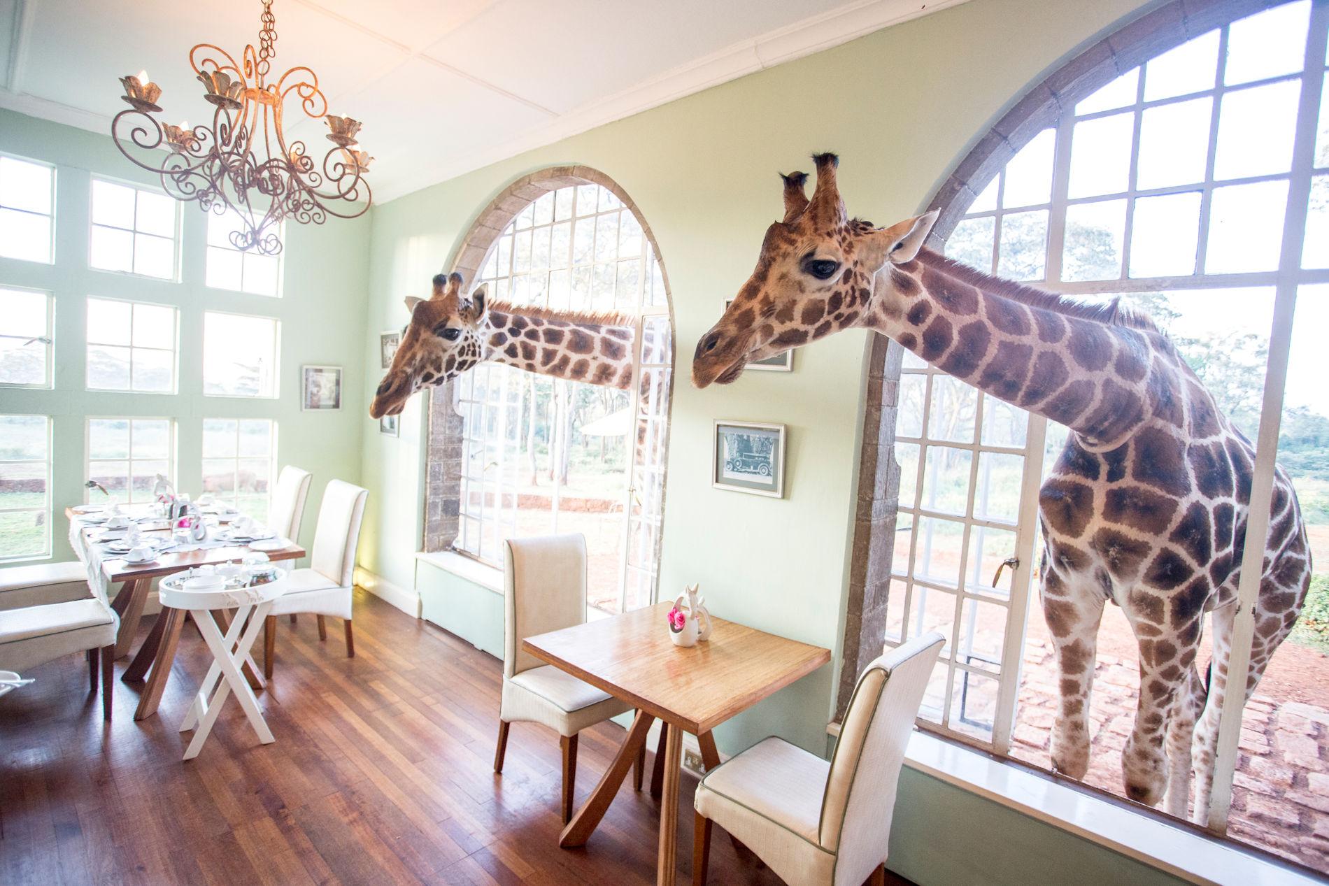 Giraffe Manor Nairobi Kenia