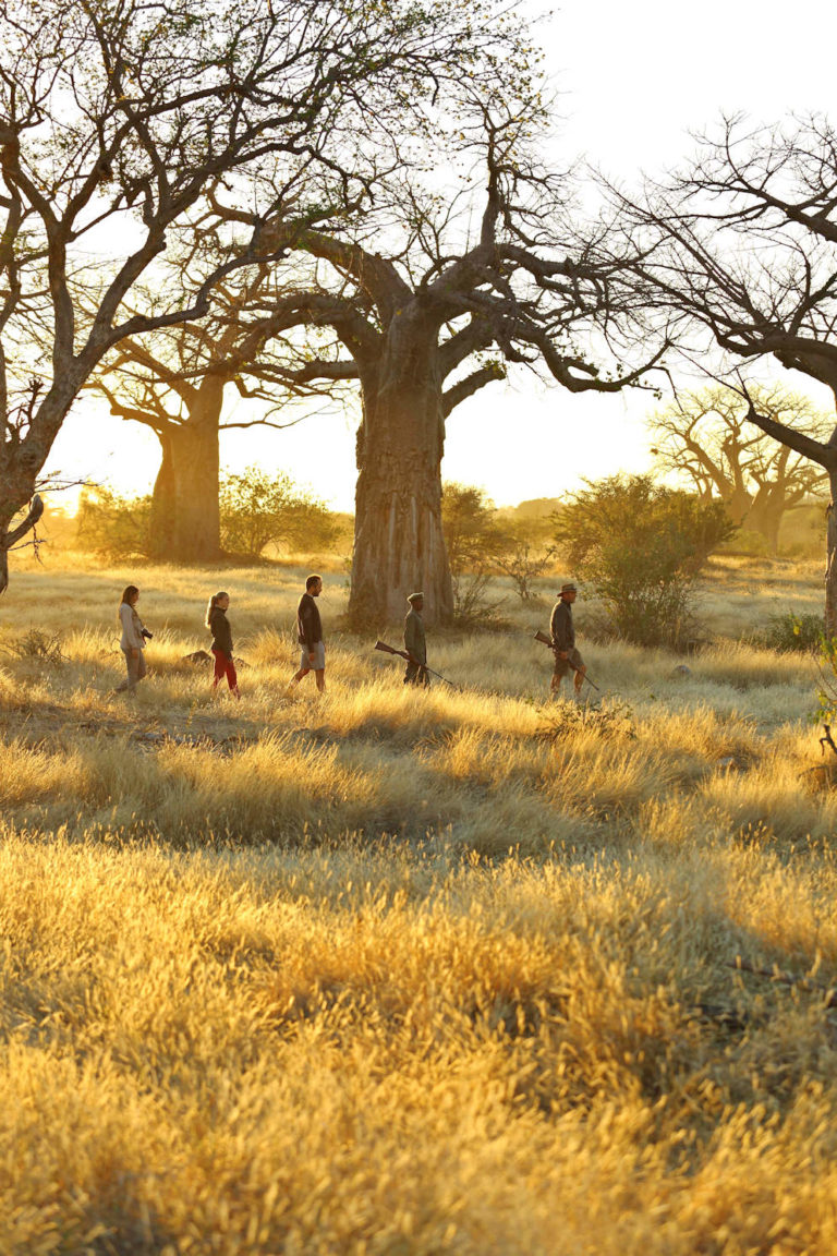 Tansania Safari Kichaka Camp Ruaha