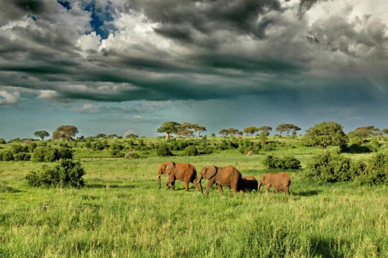 Tansania Safaris und Reisen