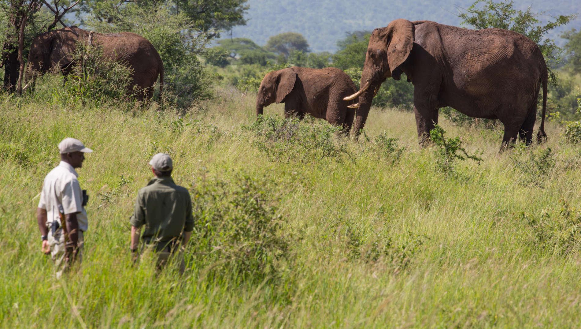 Tarangire Elefanten