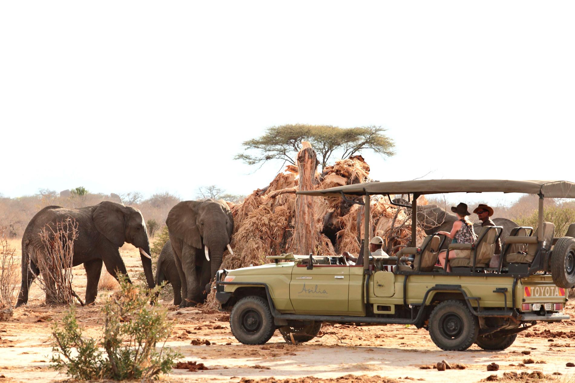 Jabali Elephant Baobab Upclose Ruaha NP Tanzania © Asilia Africa