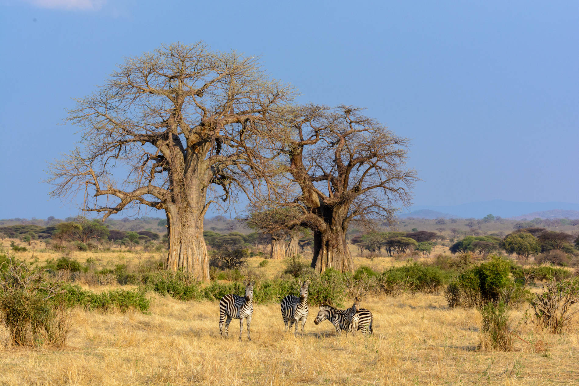 Jabali Ridge Ruaha Tanzania copyright Roger de la Harpe