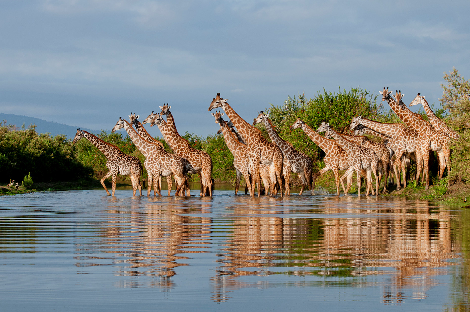 Selous Giraffe River Reflections Roho ya Camp Selous copyright Robert J Ross
